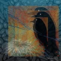 Corvus Familia Nidus