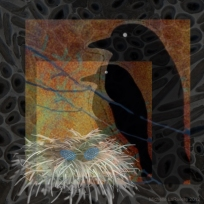 Corvus Familia Ovi