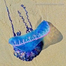 LaRiviere_jellyfish_-2