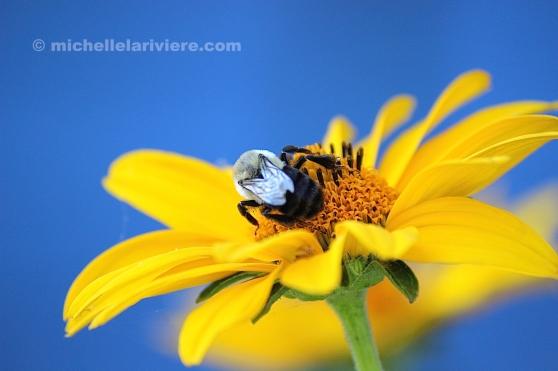 Bee Back