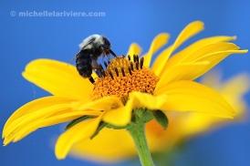 Bee Standing