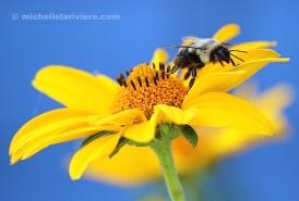 Bee Departing