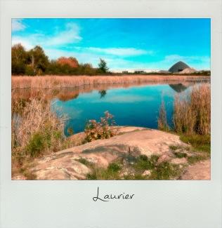 Laurier Wetlands